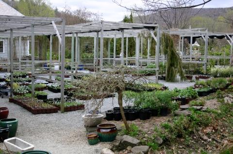 perennial-yard