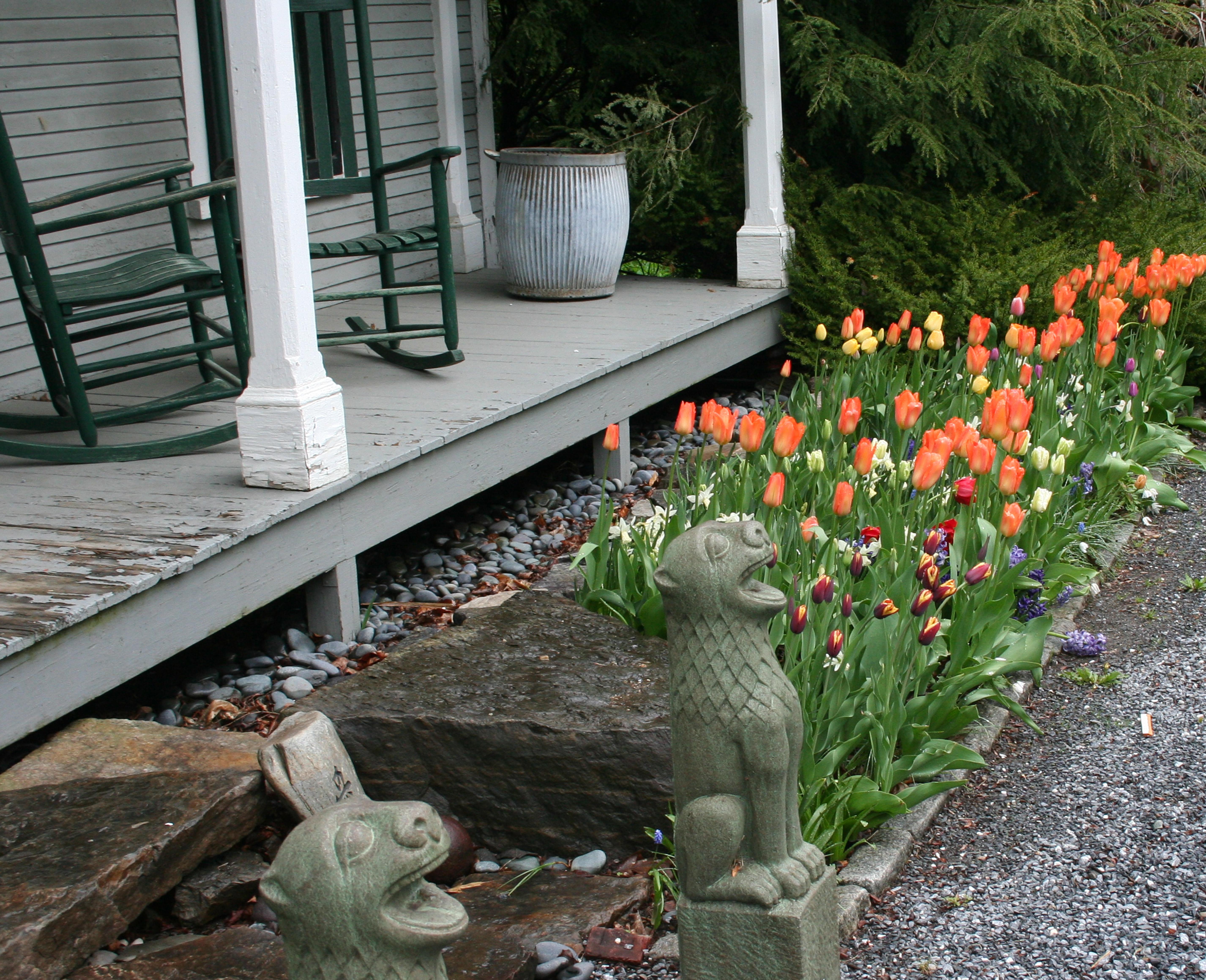 Tulip home garden