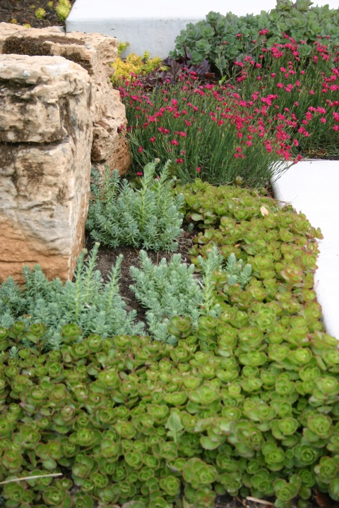 Dianthus and Sedums