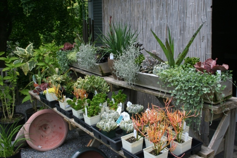 Great succulents!