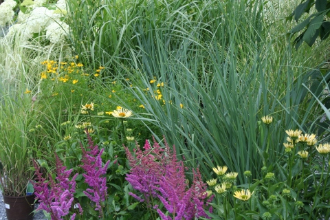 Astilbe, Echinacea and Grasses in Display