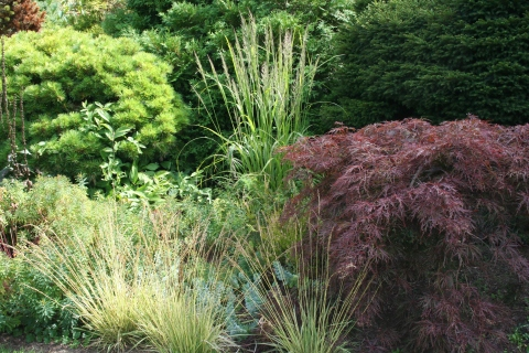Conifers, Japanese Maples and Grasses