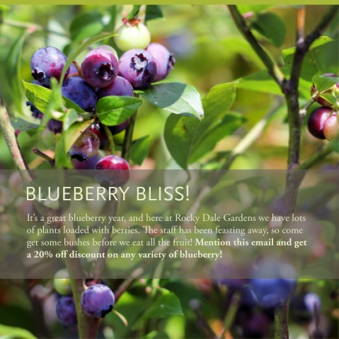 Blueberry Bliss Sale!