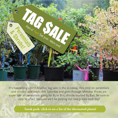 Tag Sale Part 2! Perennials and Shrubs